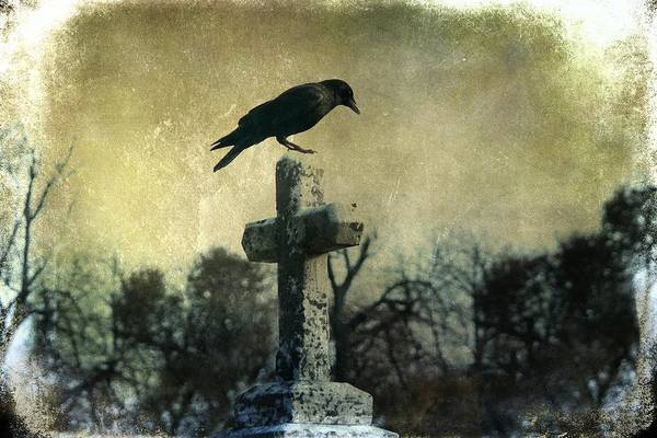 Wall Art - Photograph - Dark Graveyard Crow  by Gothicrow Images