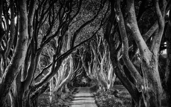 Wall Art - Photograph - Dark Hedges In Monochrome by Andrew Wilson