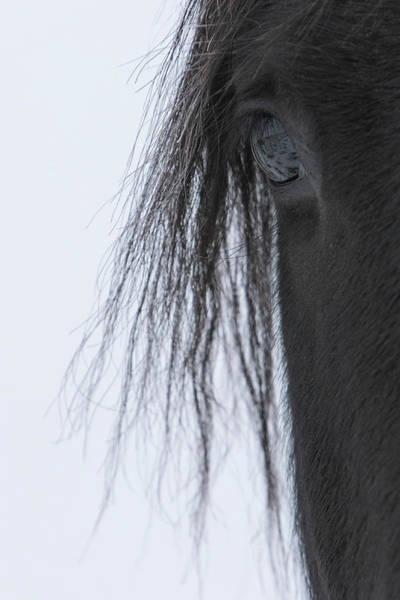 Photograph - Dark Horse by Kent Keller