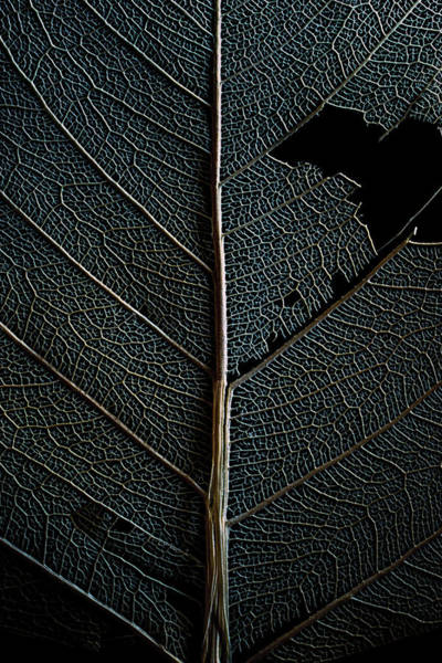Photograph - Dark Leaf by Christopher Johnson