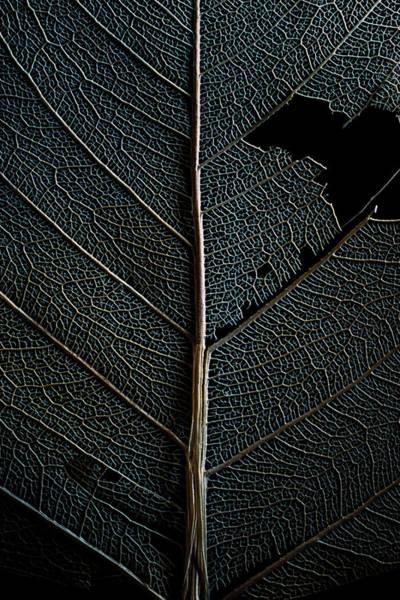 Wall Art - Photograph - Dark Leaf by Christopher Johnson