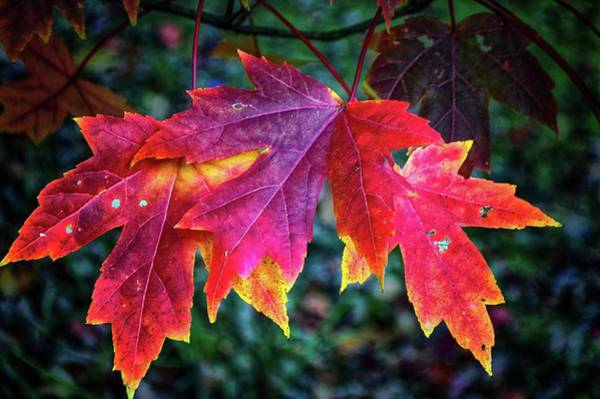 Photograph - Autumn Bouquet by Susan Callaway