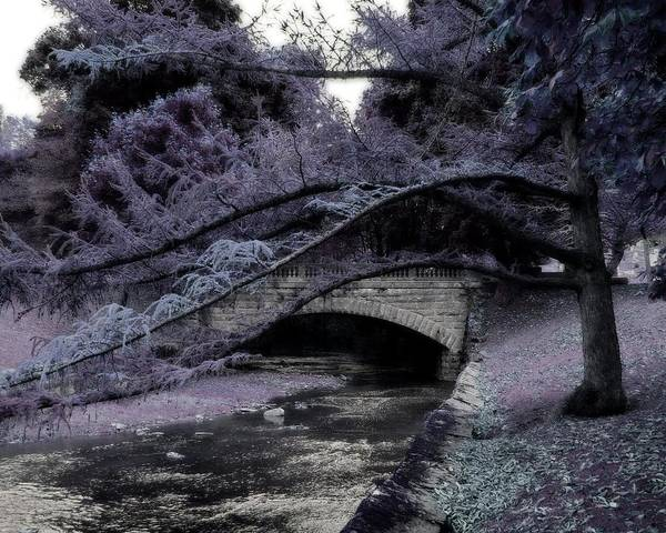 Wall Art - Photograph - Dark Purple  by Gothicrow Images