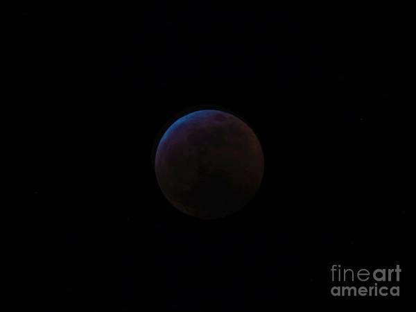 Photograph - Dark Super Blood Wolf Moon Lunar Eclipse 2019 29407 by Robert Knight