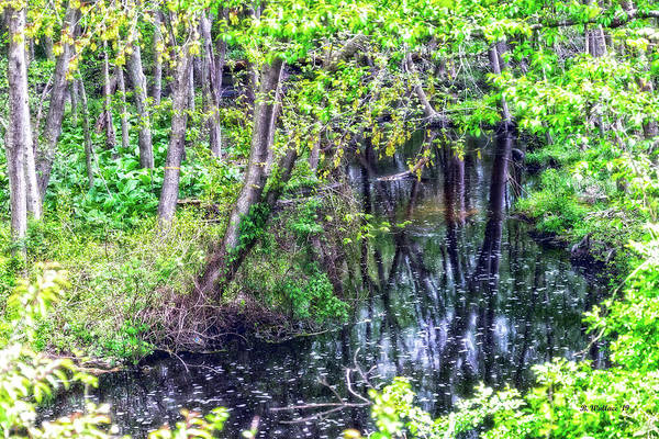 Wall Art - Photograph - Dark Water Through The Woods by Brian Wallace