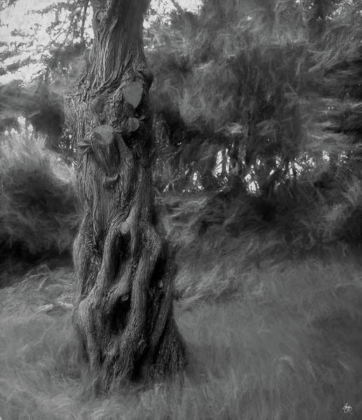 Photograph - Dark Wind In The Cedars by Wayne King