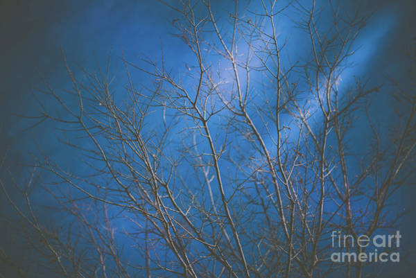 Photograph - Dark Winter by Dheeraj Mutha