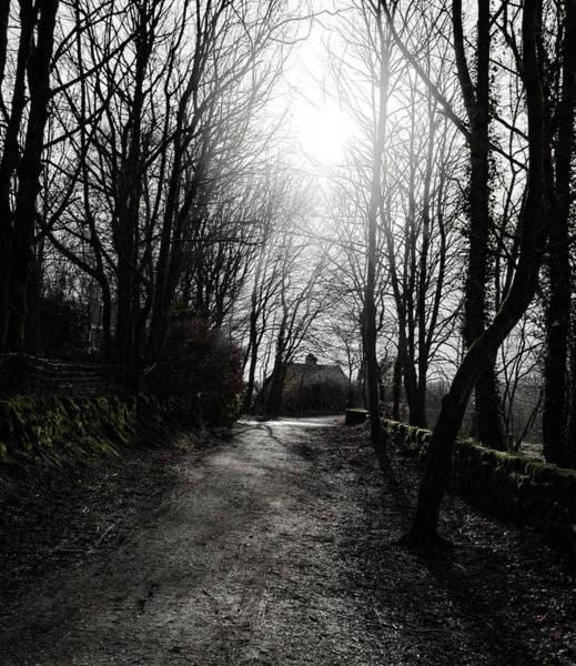 Photograph - Dark Woods by Scott Lyons