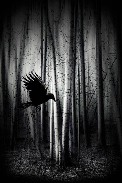 Photograph - Darker - Raven by Dirk Wuestenhagen