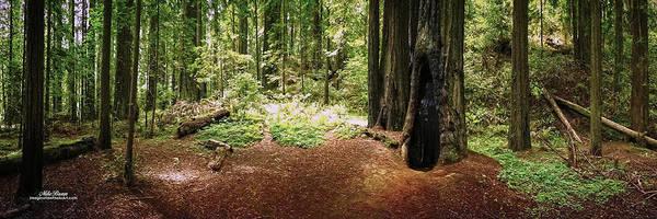 Wall Art - Digital Art - Darth Forest by Mike Braun