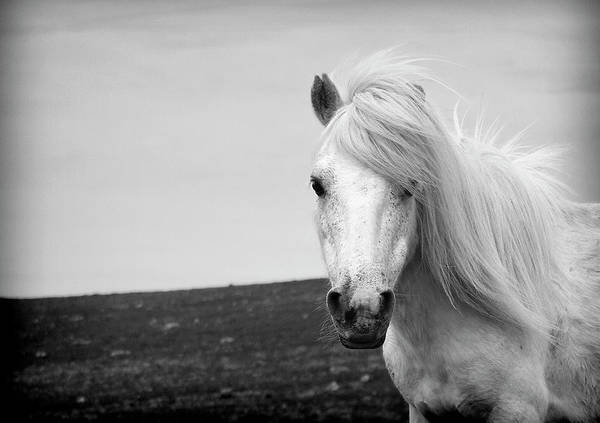 Moored Photograph - Dartmoor Pony by Adam Hirons Photography