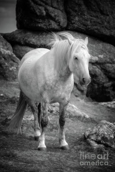 White Horse Photograph - Dartmoor Pony, Black And White by Delphimages Photo Creations
