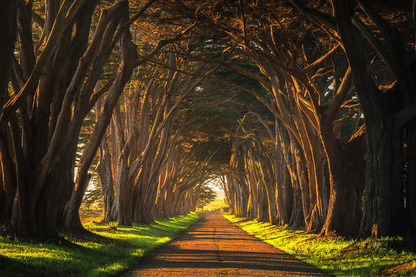 Photograph - Dawn At The Cypress Tree Tunnel by Brad Scott