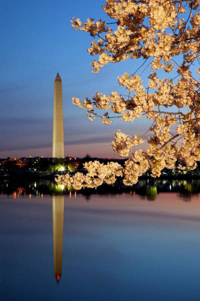 Tidal Basin Photograph - Dawn At Tidal Basin With Blossoming by Danita Delimont