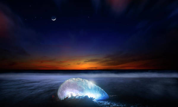 Siphonophore Photograph - Dawn Of A Warrior Panorama by Mark Andrew Thomas
