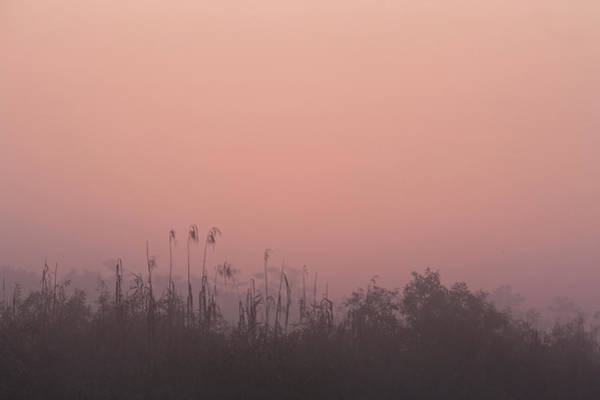 Gulf State Park Photograph - Dawn Over The Reeds by Per-gunnar Ostby