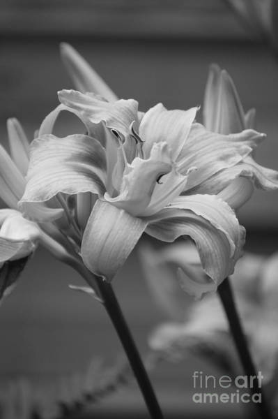 Photograph - Day Lily Yellow Filter by Jeni Gray