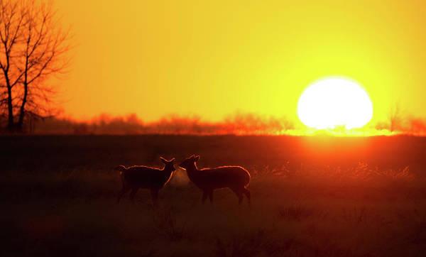 Photograph - Daybreak by Gary Kochel