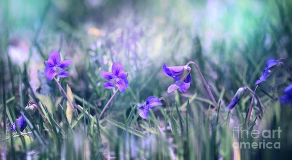 Photograph - Daybreak by Susan Warren