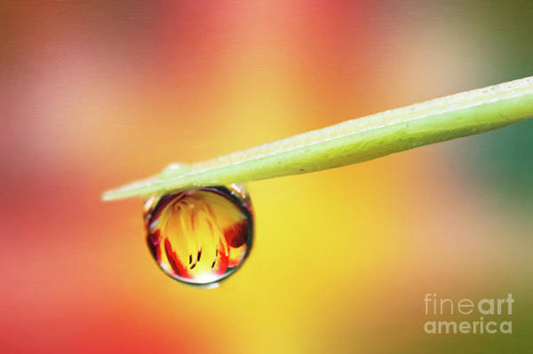 Photograph - Daylily In A Droplet by Anita Pollak