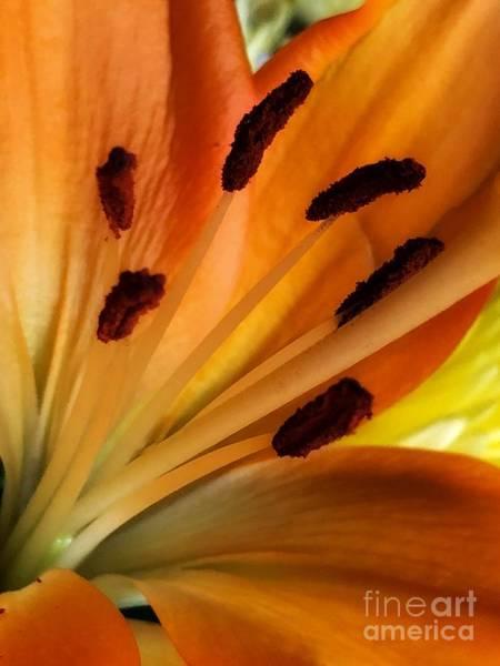 Photograph - Daylily by Marcia Breznay