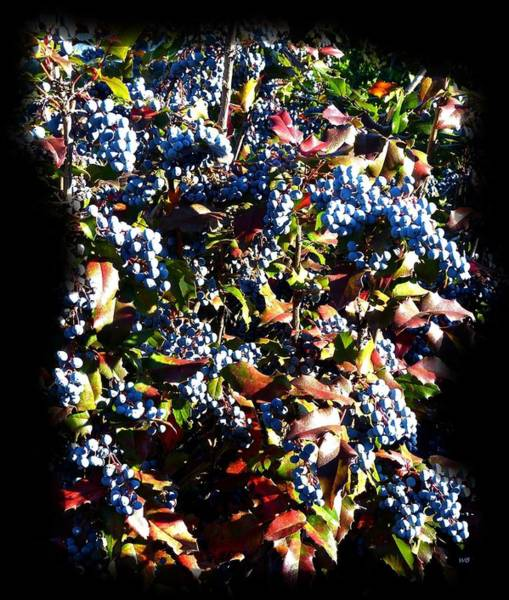 Wall Art - Photograph - Days Of Autumn 8 by Will Borden
