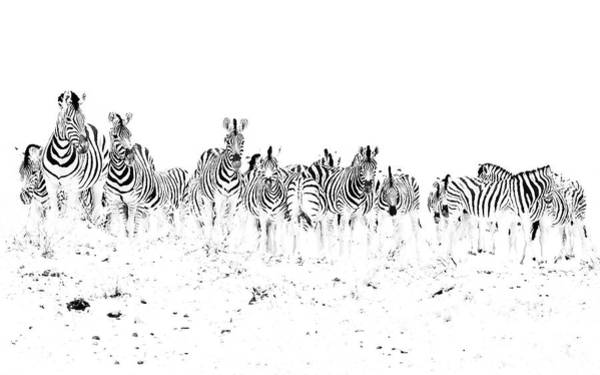 Photograph - Dazzle by Hamish Mitchell