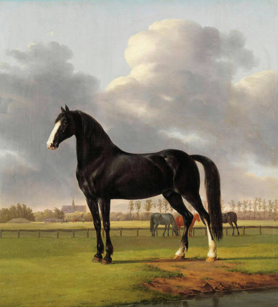 Wall Art - Painting - De Vlugge, The Fast One In A Meadow, 1828 by Anthony Oberman