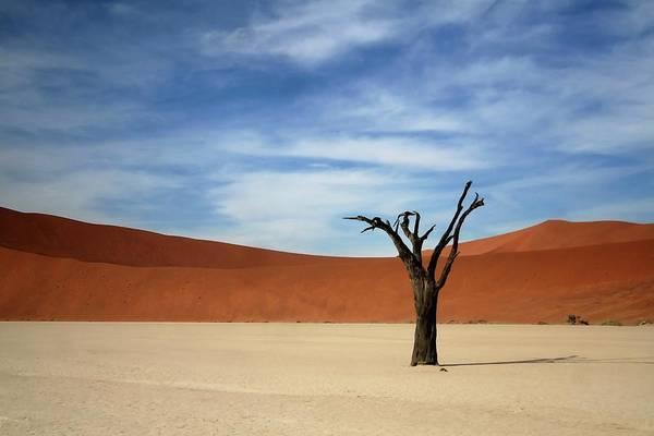 Wall Art - Photograph - Dead Acacia Tree by A Rey