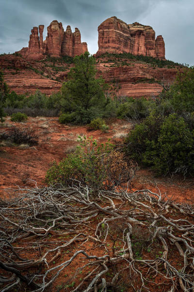 Photograph - Dead Branches At Rock Formation by Rick Strobaugh