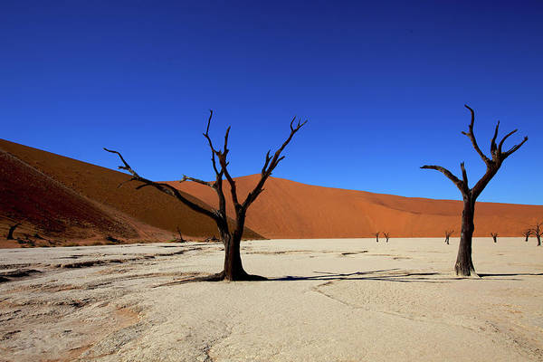Wall Art - Photograph - Dead Camel Thorn Trees.dead Vlei by David Cayless
