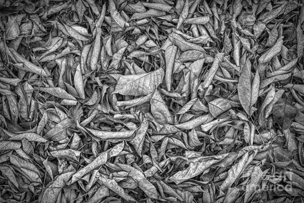 Photograph - Dead Leaves In B W by Jon Burch Photography