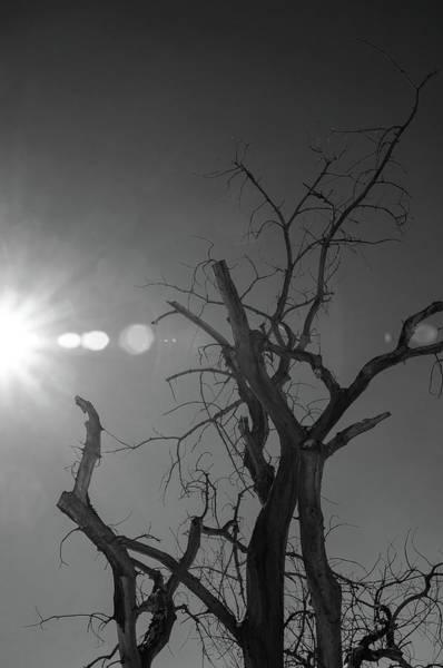 Photograph - Dead Spotlight by Dan Urban