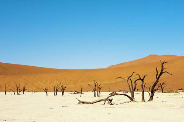 Wall Art - Photograph - Dead Tree, Deadvlei, Sossusvlei, Namib by Sergio Pitamitz / Robertharding