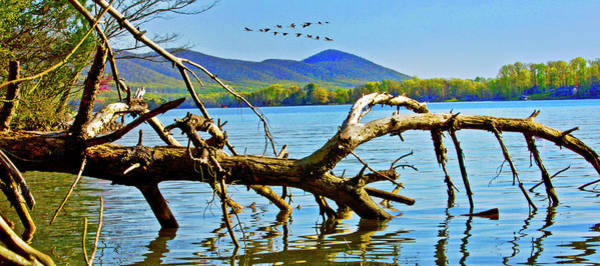 Photograph - Dead Tree Geese, Smith Mountain Lake by James B Roney