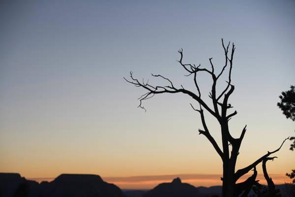 Wall Art - Photograph - Dead Tree, Grand Canyon, Unesco World by Neil Emmerson / Robertharding