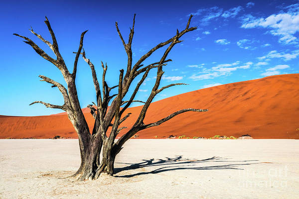 Photograph - Dead Tree In Deadvlei, Namibia by Lyl Dil Creations