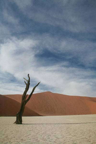 Wall Art - Photograph - Dead Tree In Sossusvlei by A Rey