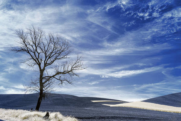Wall Art - Photograph - Dead Tree In The Palouse by Jon Glaser