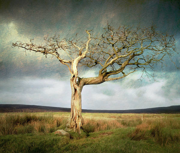 Bolton Photograph - Dead Tree On Moors by Peter Chadwick Lrps