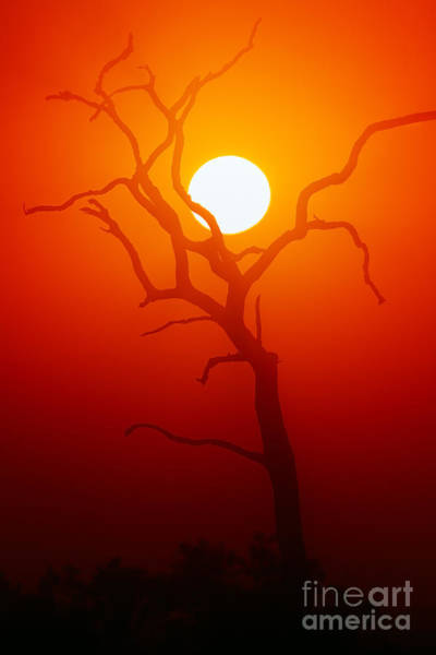 Wall Art - Photograph - Dead Tree Silhouette With Dusty Sunset by Johan Swanepoel