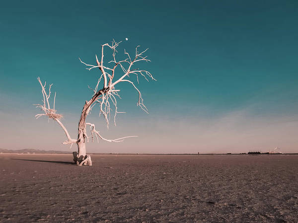 Geothermal Photograph - Dead Tree With Moon At Salton Sea by David Teter