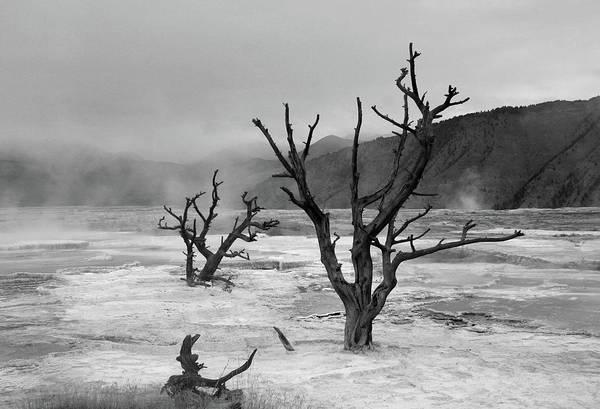 Wall Art - Photograph - Dead Tree, Yellowstone by Gary Koutsoubis
