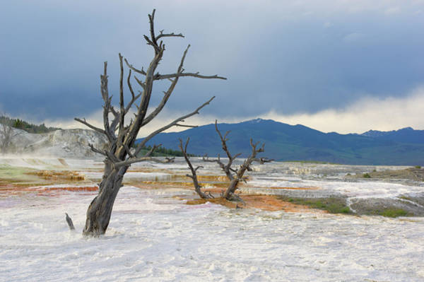 Wall Art - Photograph - Dead Trees At The Top Of Canary Spring by Neale Clark / Robertharding