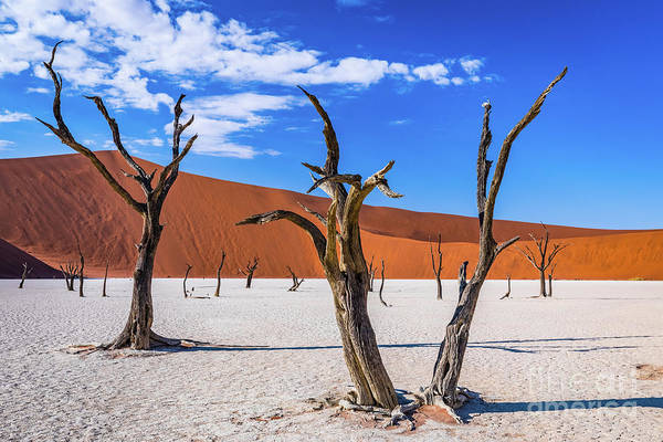 Photograph - Dead Trees In Deadvlei, Namibia by Lyl Dil Creations