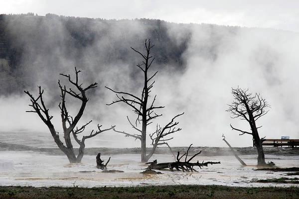 Wall Art - Photograph - Dead Trees On Hot Springs by Piriya Photography