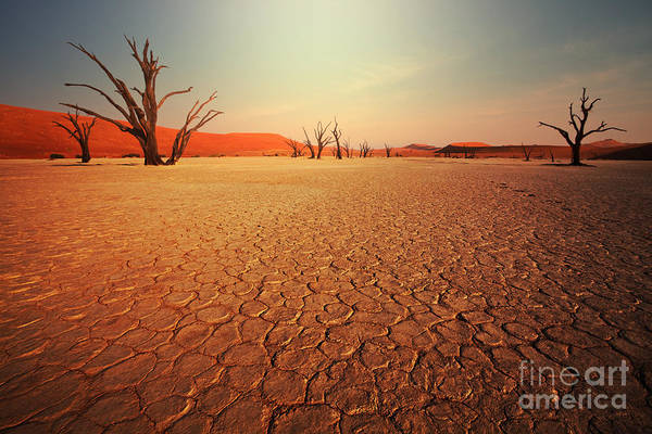 Arid Climate Wall Art - Photograph - Dead Valley In Namibia by Galyna Andrushko