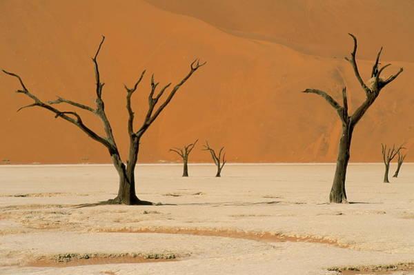 Wall Art - Photograph - Dead Vlei, Sossusvlei Dune Field by Ann & Steve Toon / Robertharding
