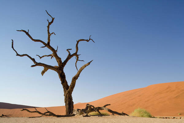 Wall Art - Photograph - Dead Vlei, Sossusvlei, Namibia by Paul Souders