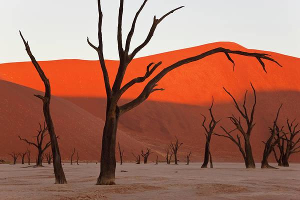 Environmental Issue Wall Art - Photograph - Dead Vlei, Soussusvlei, Namibia, Africa by Peter Adams